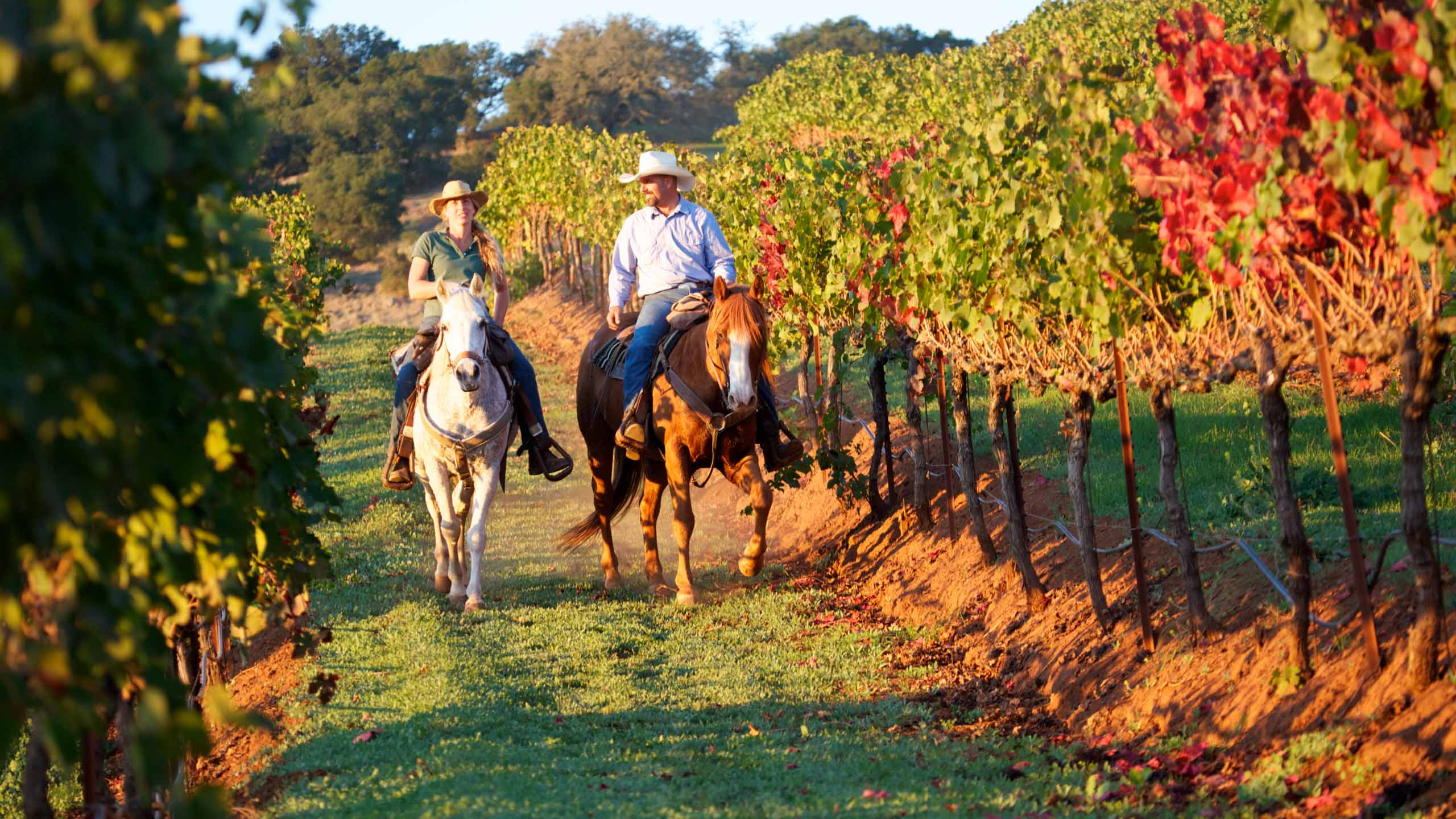 Horse riding in Napa Valley's vineyards - Wayne Pollock Exclusive Luxury