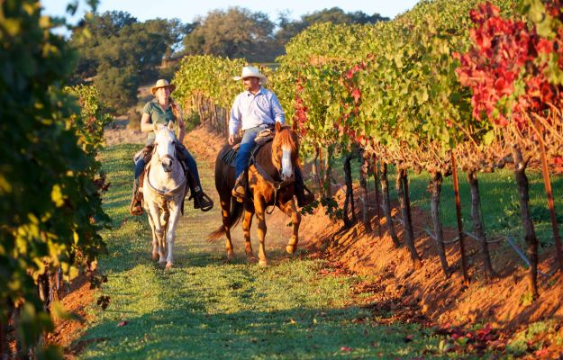 Horse riding in Napa Valley's vineyards - Luxury Holidays